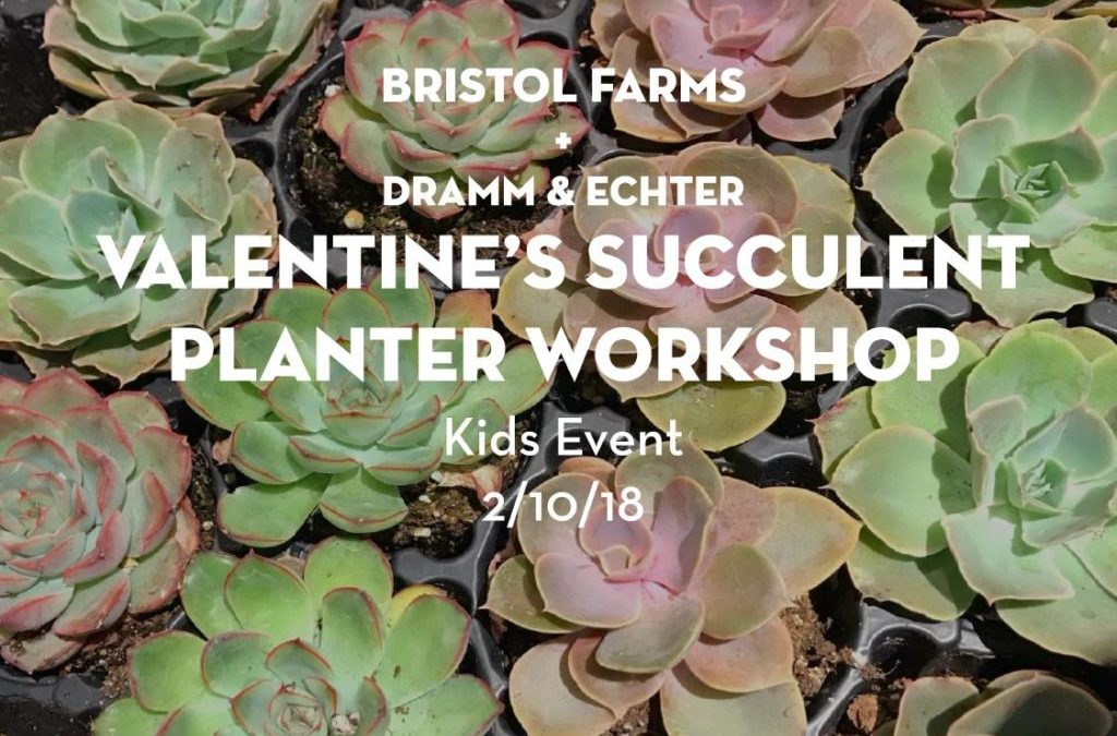 Dramm & Echter supports Bristol Farms Kids Valentine's Succulent Planter Workshop